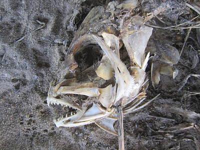 Photograph - Fish Bones by Jim Clark