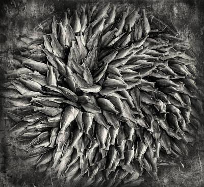 Fish By Design Art Print by Nichon Thorstrom