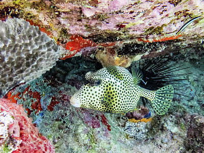 Trunkfish Wall Art - Photograph - Fish Come In All Shapes by Gary Brewer