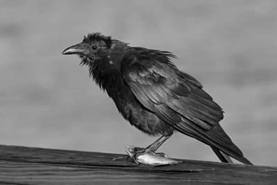 Photograph - Fish Crow With Fish Bw by Bradford Martin