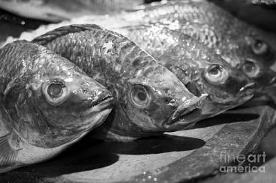 Photograph - Fish by Dean Harte