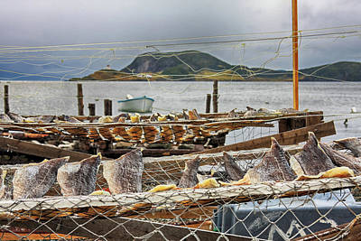 Photograph - Fish Drying In Newfoundland by Tatiana Travelways