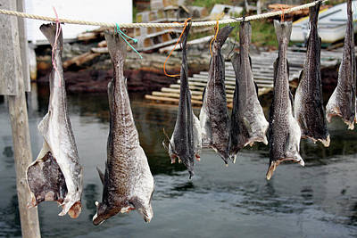 Photograph - Fish Drying In Salvage Newfoundland by Tatiana Travelways