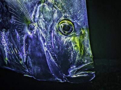 Photograph - Fish Face by Gary Shepard