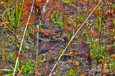 Fish Faces Frog Art Print