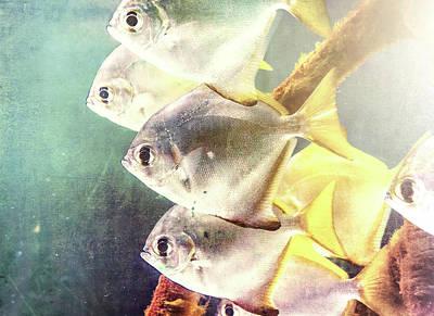 Photograph - Fish Family by Andrea Anderegg