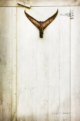 Photograph - Fish Finn Door by Craig J Satterlee
