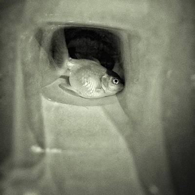 Animals Wall Art - Photograph - Fish Funeral #fish #goldfish by Rafa Rivas