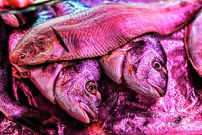 Photograph - Fish Glow by Rick Bragan