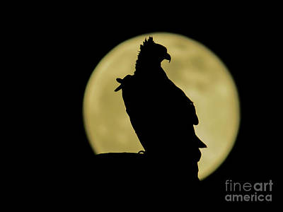 Moonscape Photograph - Fish Hawk Silhouette by Zina Stromberg