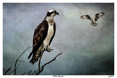 John Williams Digital Art - Fish Hawks by John Williams