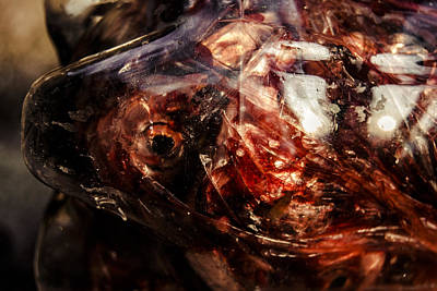 Photograph - Fish Heads 02 by Grebo Gray
