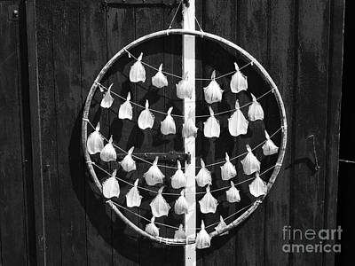 Photograph - Fish In A Hoop 2 by Lexa Harpell