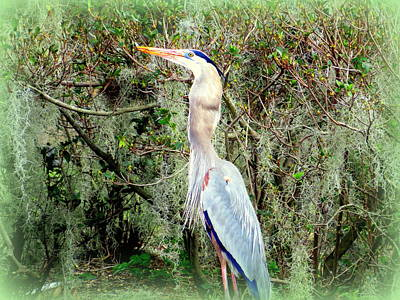 Photograph - Fish In Heron Throat 3 1112017 by Mark Lemmon