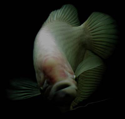 Fish In Tank Art Print by Tianxin Zheng