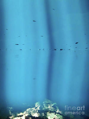 Photograph - Fish In The Cenote Sunbeams by D Hackett