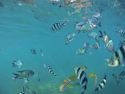 Photograph - Fish In The Sea  by Keiran Lusk