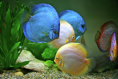 Multi Colored Photograph - Fish In Water by Vietnam