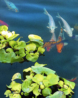 Butterfly Koi Photograph - Fish-koi In A Pond, Triptych Part 1 by Arthur Babiarz