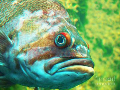 Photograph - Fish Looking At You by David Frederick