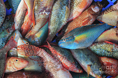 Photograph - Fish Market by Verena Matthew