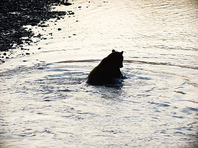 Grizzly Bear Photograph - Fish On by Dora Miller