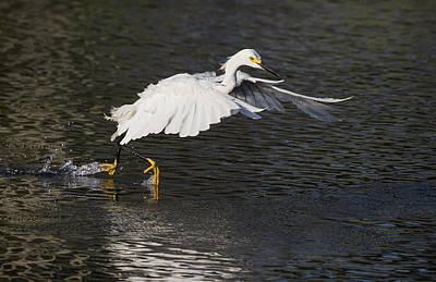 Photograph - Fish Run by Art Cole