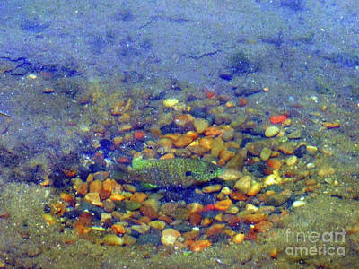 Fish Spawning Art Print