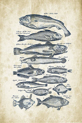 Salmon Digital Art - Fish Species Historiae Naturalis 08 - 1657 - 01 by Aged Pixel