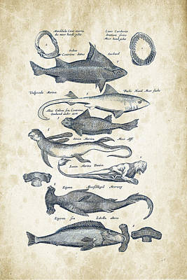 Animals Digital Art - Fish Species Historiae Naturalis 08 - 1657 - 07 by Aged Pixel
