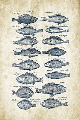 Animals Digital Art - Fish Species Historiae Naturalis 08 - 1657 - 14 by Aged Pixel