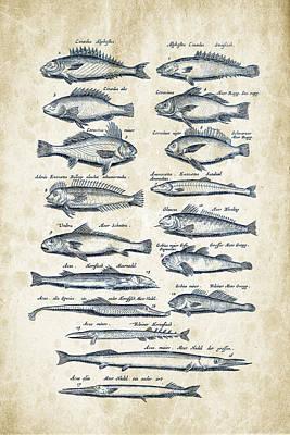 Animals Digital Art - Fish Species Historiae Naturalis 08 - 1657 - 15 by Aged Pixel