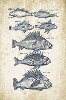 Animals Digital Art - Fish Species Historiae Naturalis 08 - 1657 - 16 by Aged Pixel