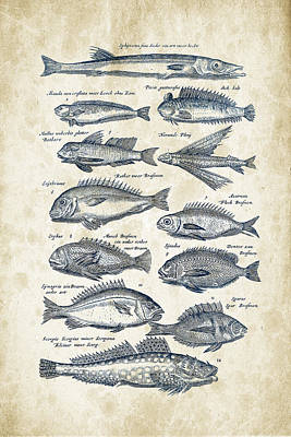 Animals Digital Art - Fish Species Historiae Naturalis 08 - 1657 - 18 by Aged Pixel