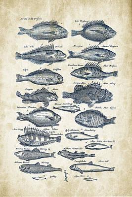 Animals Digital Art - Fish Species Historiae Naturalis 08 - 1657 - 19 by Aged Pixel