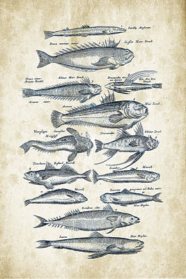 Vintage Diner Cars - Fish Species Historiae Naturalis 08 - 1657 - 21 by Aged Pixel