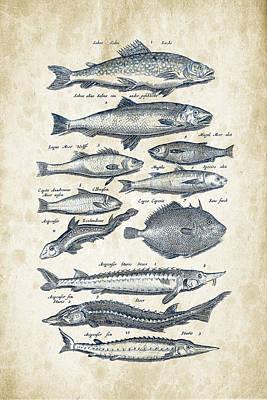Animals Digital Art - Fish Species Historiae Naturalis 08 - 1657 - 23 by Aged Pixel