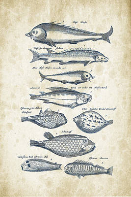 Fish Species Historiae Naturalis 08 - 1657 - 25 Art Print by Aged Pixel