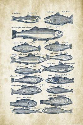 Animals Digital Art - Fish Species Historiae Naturalis 08 - 1657 - 30 by Aged Pixel