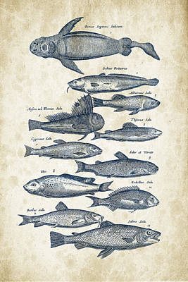 Fish Species Historiae Naturalis 08 - 1657 - 31 Art Print by Aged Pixel