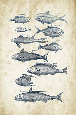 Fish Species Historiae Naturalis 08 - 1657 - 35 Art Print by Aged Pixel