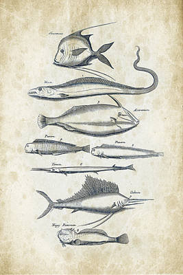 Fish Species Historiae Naturalis 08 - 1657 - 37 Art Print by Aged Pixel