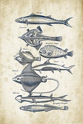 Animals Digital Art - Fish Species Historiae Naturalis 08 - 1657 - 39 by Aged Pixel