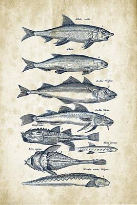Animals Digital Art - Fish Species Historiae Naturalis 08 - 1657 - 45 by Aged Pixel