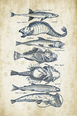 Animals Digital Art - Fish Species Historiae Naturalis 08 - 1657 - 46 by Aged Pixel