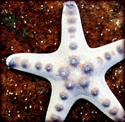 Photograph - Fish Star by Faith Williams