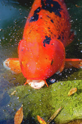 Photograph - Fish Surprise by Raphael Lopez
