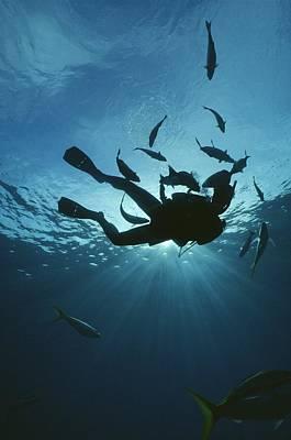 Fish Swim Around A Diver In The Cayman Art Print