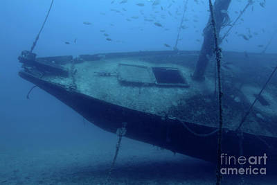 Fish Swimming Around The Hull Of The Le Voilier Shipwreck Underwater Art Print by Sami Sarkis