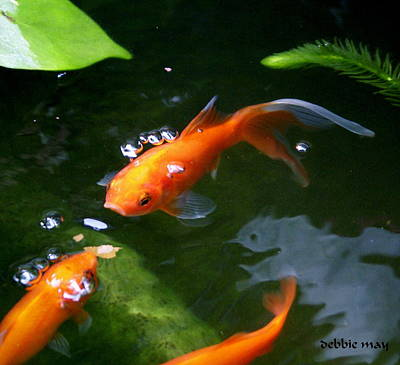 Koi Digital Art - Fish Tales by Debbie May